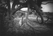 """""""Не боимся мы тебя,""""чудище лесное""""!"""" / дети,дерево"""