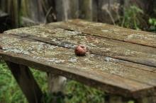 Гнилое яблоко / в далекой заброшенной деревне...