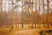 Осень в парке... / Осень в парке...