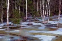апрельская акварель / лесное болото,оттепель