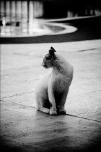 Коша / Неизвестный кот...