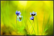 Художница Весна... / Художница Весна...