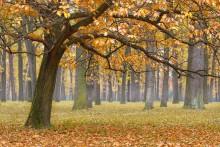 Осень в дубовой роще / про осень