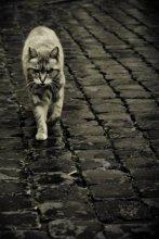 Коты Рима / Кот из приюта  в Риме