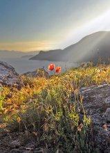 весенний закат / Крым, весна