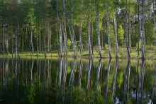Я в весеннем лесу пил березовый сок.... / Я в весеннем лесу пил березовый сок....