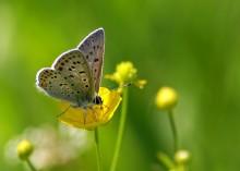 / Бабочка