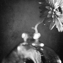 Flos et Vas / Helichrysum bracteatum