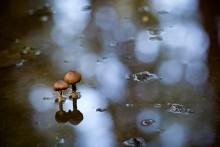 Сезон дождей / Дождь...