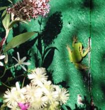 Зелёный натюрморт / пардон за чёткость, под рукой был только телефон :)