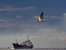 «попутным ветром» / Baltika