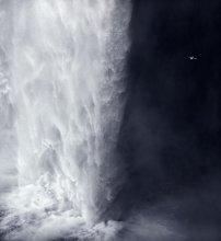 домой / отдельно кадр с птицей птица живёт за водопадом, как за занавеской