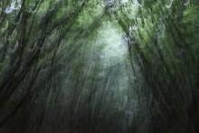 паутина / 2011, лес возле замка Истнор