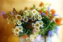 ЦВЕТЫ ПОЛЕВЫЕ / Полевые цветы.