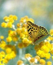 Радость лета / бабочка, солнце, цветок