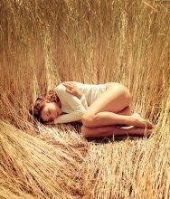 harvest / model: Lee