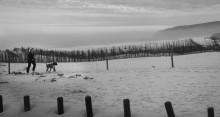 Прогулка III / В черно-белом.   ...................................