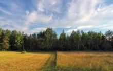 Травы августа / ......