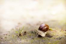 Маленький большой мир / Люди редко задумываются о том, что их окружает...