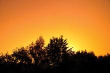 Грозовой закат / Фото было сделано 14 августа во время грозы. Шел дождь, гремел гром, облака уже редкие были, заходило солнце... Его свет через облака создал сюрреалистические пейзажи по всему Минску. Т.к. у меня из окна домов не видно, то выкладываю деревья :)