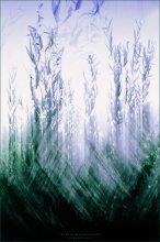 [ Where Willows Grow ] / **********