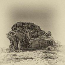Мимикрия / Невелика тень в полдень в пустыне
