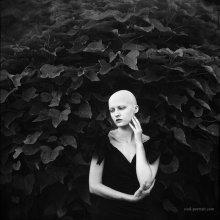 Древо / http://soul-portrait.com/