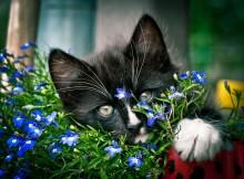 Без названия / котёнок в клумбе