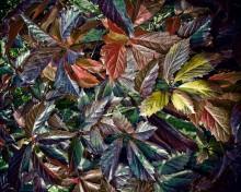 Осень / Осень листья поджигает, за собой мосты сжигает... и мою любовь ~