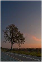 Дерево на закате / На исходе дня...