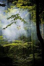 Луч света / Буковый лес.