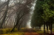 И в старом парке Осень правит бал... / Б. к.