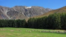 Страна овец / Снимок сделан в апреле 2011 года на Южном острове Новой Зеландии