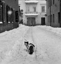 про одиноких / фото совсем не о коте, если так подумать..