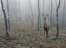 Осенне-туманная... / Случайная встреча