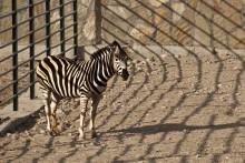 Парадокс / И у зебры бывают то черные то белые полосы