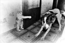 Лапы вверх,собака! / ---------