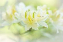 Весенний свет / Чтобы весна не забывалась...