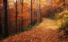 По осеннему лесу... / Б. к.