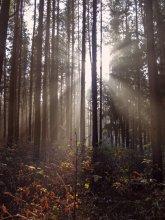 утро в лесу / осеннее