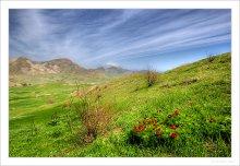 Крымские Пионы / Весна, Крым, окрестности Коктебеля, Тихая Бухта :)