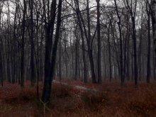 преддверье холодов и снега / парк Лесотехнической академии в Санкт-Петербурге, начало декабря 2011г