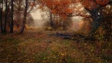 / Осеннее настроение / / р.Ислочь. Хмурый октябрь этого года. Двурядная панорама из 6 горизонтальных кадров (2 х 3)