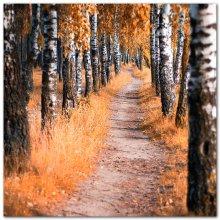 following the autumn path... / ***