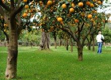 / Оранжевое, желтое...