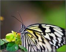 Про бабочку / Пользуясь случаем-2