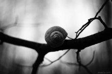 жизнь как спираль / Говорят, что перед каждым из нас всегда лежат несколько путей, и нам нужно выбрать единственный путь из многих. Но разве это так? Посмотрите внимательно - перед вами нет ни путей, ни дорог - дорогу вы делаете сами.