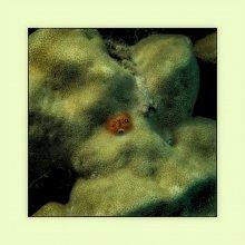 Фактуры подводного мира / Серия собирается на Фэйсбуке http://www.facebook.com/media/set/?set=a.3082452389218.2154562.1501107518&type=1