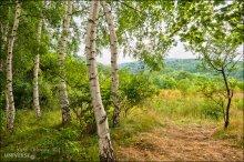 """Bulgaria. Vitosha Park. Birch grove / Нац.парк Витоша в предместьях Софии. Панорамная аллея. На краю маленькой березовой рощи, на """"дорожке пенсионеров"""", как называют ее местные..."""