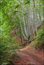"""Vitosha Park. Eco-path «Panorama» / Еще один вид с """"дорожки пенсионеров""""... Нац.парк Витоша в предместьях Софии. Панорамная аллея."""